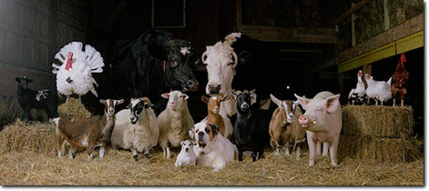 Feed & Needs for your farm animals